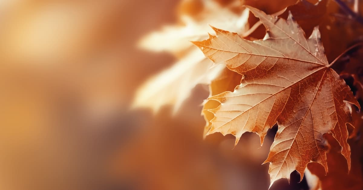 vinos del otoño