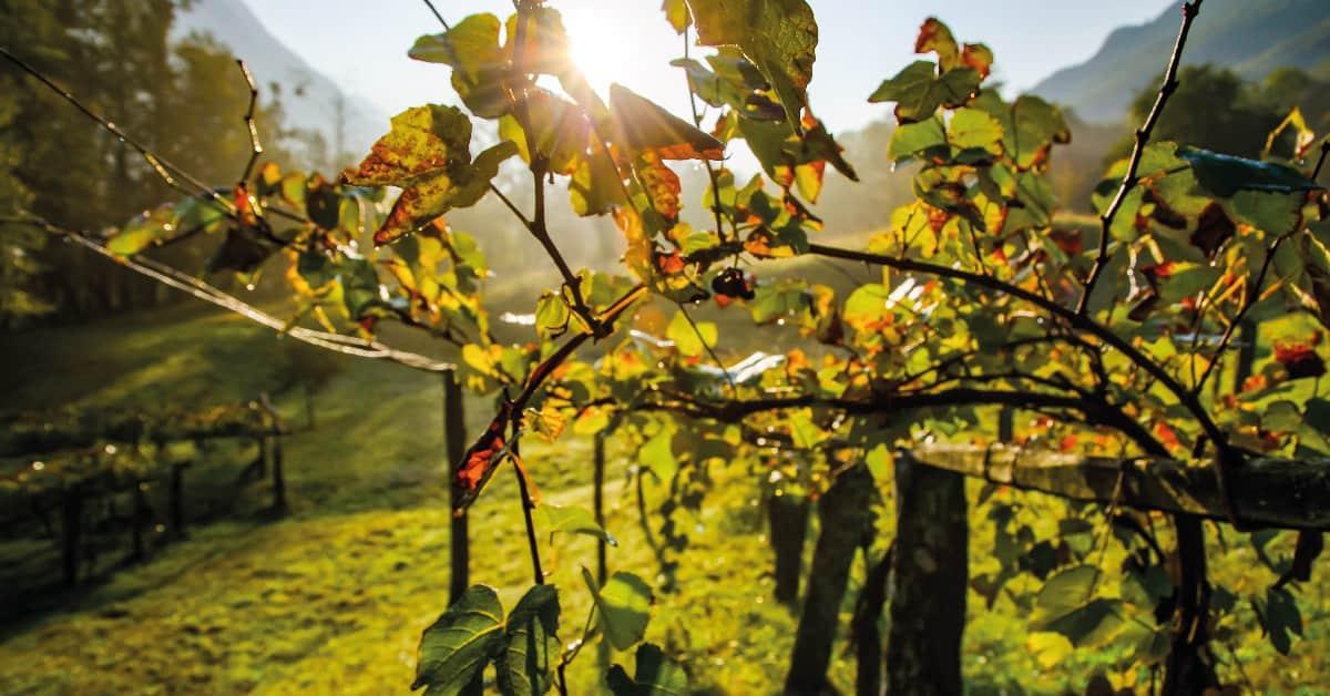 vinos cosecheros