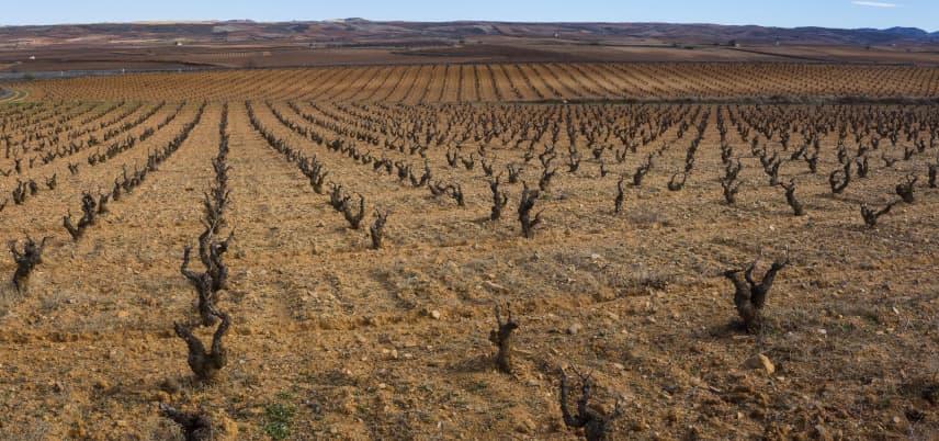 comprar vinos de Cariñena