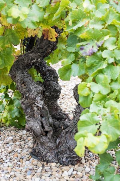 el vino de las piedras